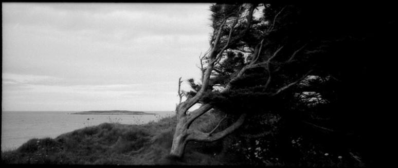L'arbre qui sait d'où vient le vent